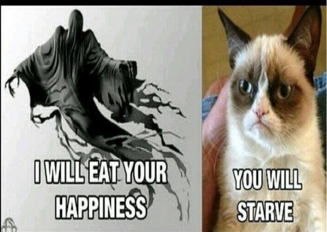 Friday Grumpy Cat Memes