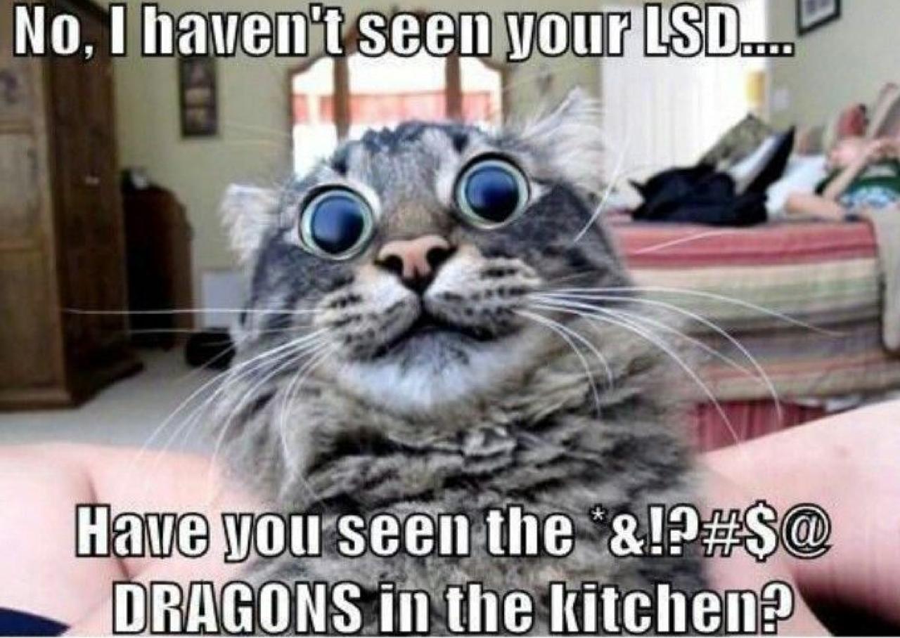 dragons in the kitchenfluorescentelemental on deviantart