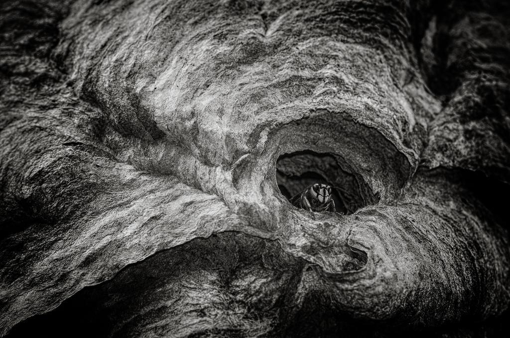 Wasp by sxsvexen
