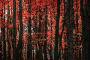 Autumn colors by sxsvexen
