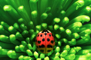 Ladybug by sxsvexen