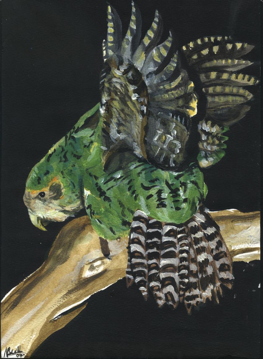 Kakapo Wallpaper Kakapo by SecretShowMo...