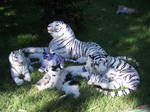 white tiger family FOR SALE