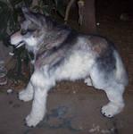 Quad wolf fixed legs