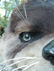 realistic otters eye by LilleahWest