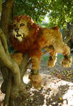 Sabertooth Lion in a tree
