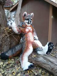 gray fox feet pads