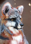 gray fox close up