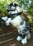 Fuzzy Pony Quadsuit