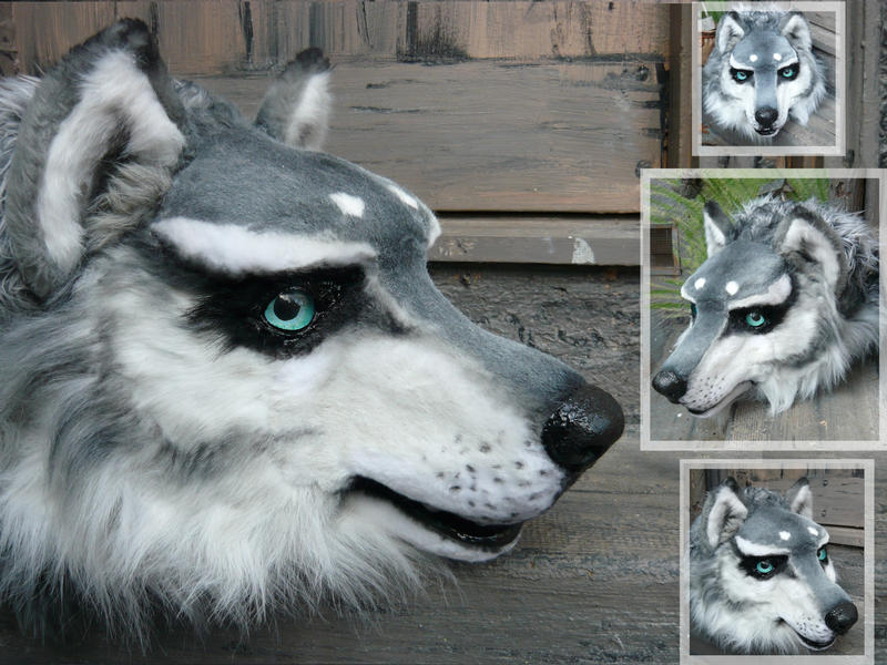 Mixers Mixers Vicking Vs Wolf ~ Husky wolf updated by lilleahwest on deviantart