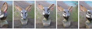 Steenbok Antelope Wip
