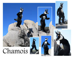 Chamois by LilleahWest