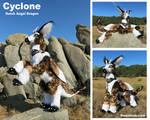 Cyclone - Dutch Angel Dragon