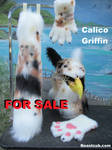 Calico Tabby Griffin SOLD