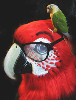 Macaw with Glasses