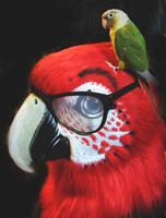 Macaw with Glasses by LilleahWest