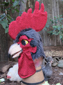 Cuckoo Color Rooster