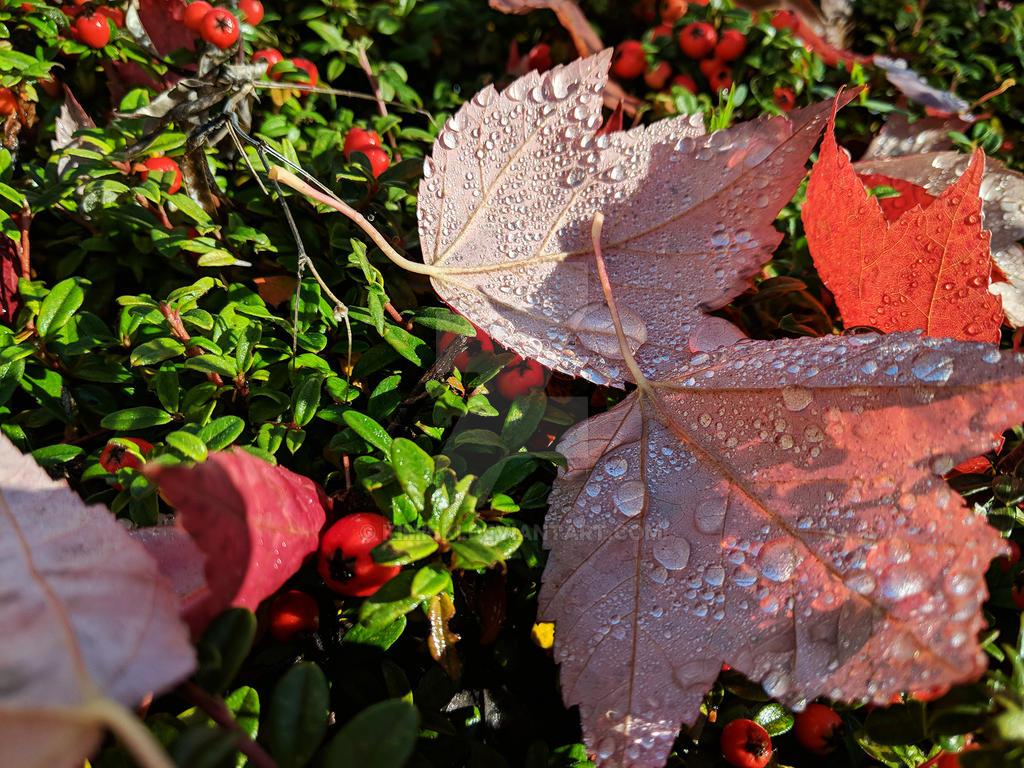 Autumn 3 by Kimiski
