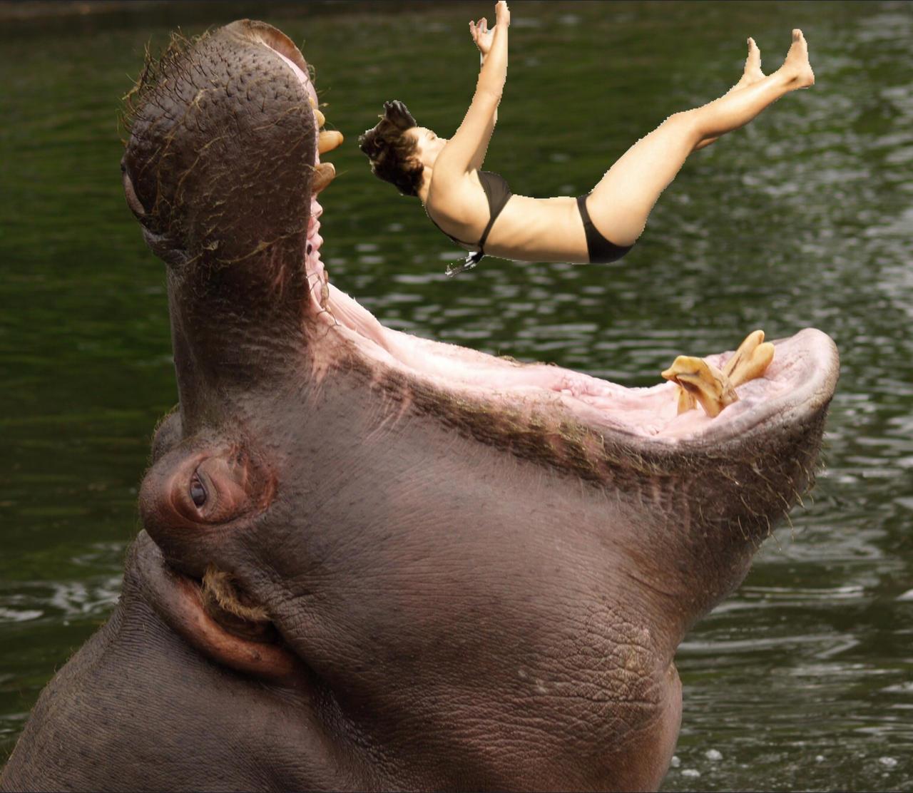 Hippo vore 9 by Voremainia on DeviantArt