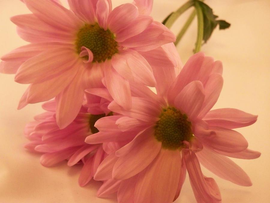 Purple Love flower wallpaper > Purple Love flower Papel de parede > Purple Love flower Fondos