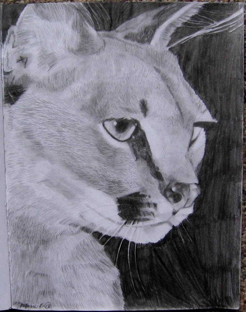 Caracal African Or Desert Lynx By Mariebauder96 On Deviantart