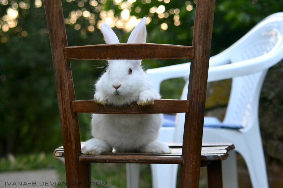 White rabbit 2 by Ivana-B