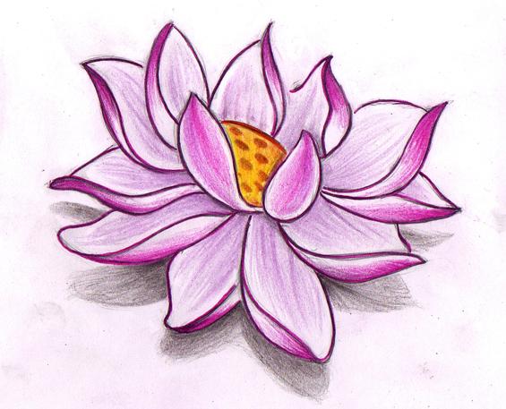lotus sketch by jerrrroen on deviantart. Black Bedroom Furniture Sets. Home Design Ideas
