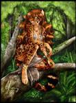 Jaguar in the shade