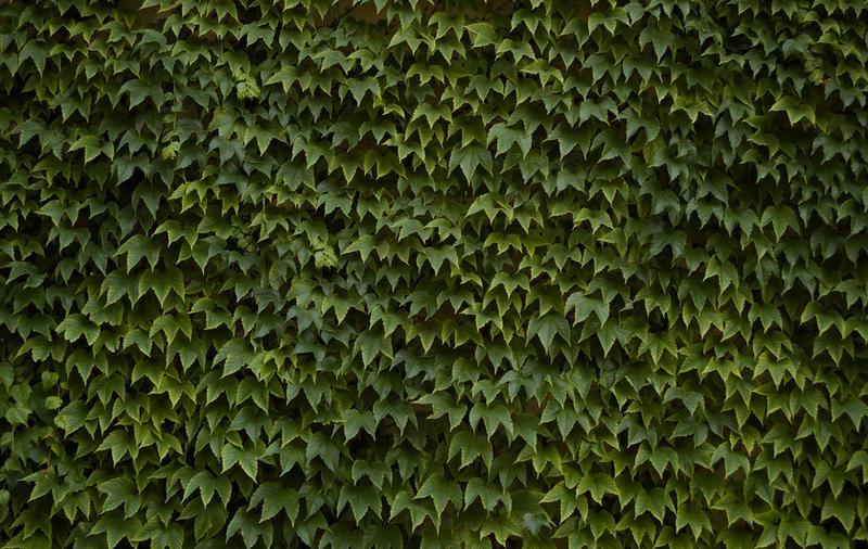 Eco Apple wallpaper, 2nd displ