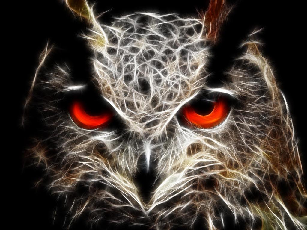 Owl Eyes Tour