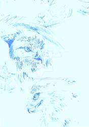 Sketches: Rough-legged buzzard