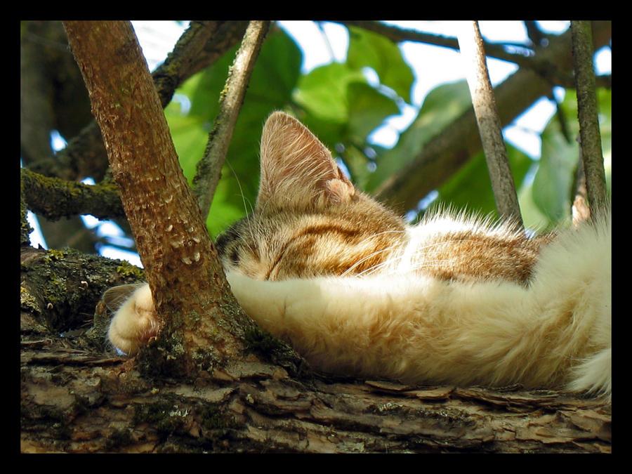 Kitty Treehouse II by Sasa-Van-Goth