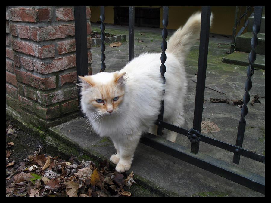 Fluffy Kitty by Sasa-Van-Goth