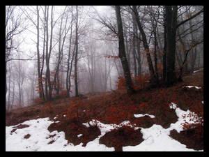 Manet Sorgfull Igjennom Skogen