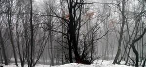At the Heart of Winter by Sasa-Van-Goth