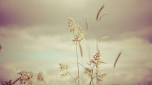Minimalistic Flowers by daenuprobst