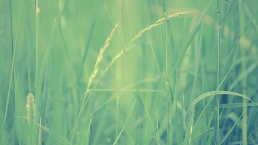 Fields Of Green by daenuprobst