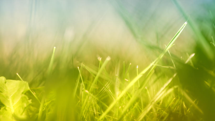 Windy Field by daenuprobst
