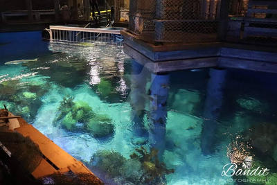 Bass pro shop Springfield MO Aquarium