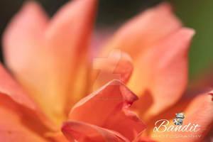 St.louis Botanical gardens fall 2019