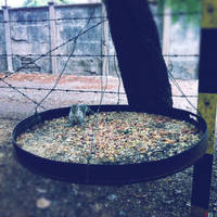 squirrel's dining area by chaitshroff