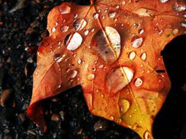 autumn by chiuchiutrain