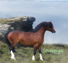 Sovereign by TrixxZebra