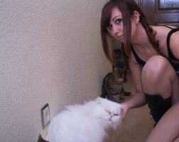 Cats by misshinata9