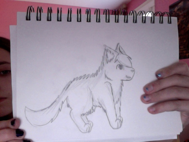 hand drawn wolf practice by realwarriorfrosty