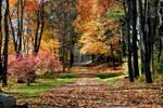 Autumn Hallmark