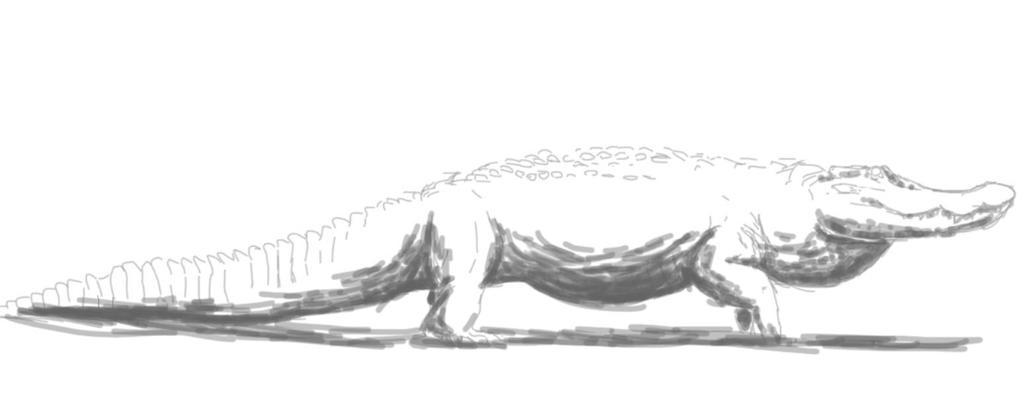 interior crocodile alligator  by SpinoSushi
