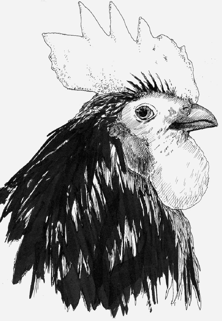 Rooster- Pen and ink by TemporalWolf