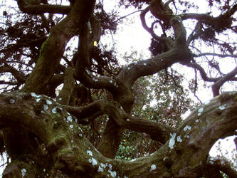 octupus tree by discipleneil777