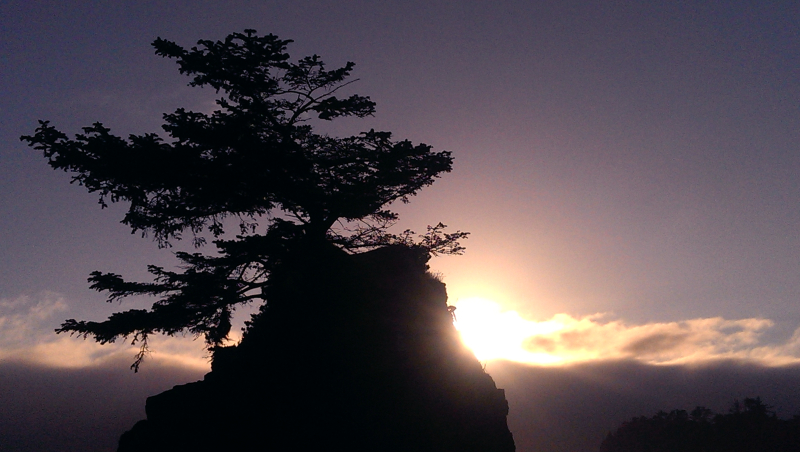 Bonzai looking tree at the beach during sunset by discipleneil777